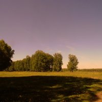В поле. :: Мила Бовкун
