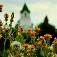 пригородный пейзаж :: Александр Прокудин