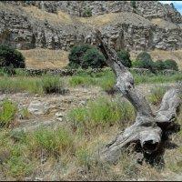 Ущелье Пайкала :: Ахмед Овезмухаммедов