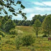 Сконе Швеция :: Priv Arter