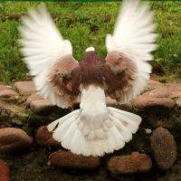 Взмахнув крылами... :: Светлана