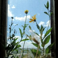 В окне. :: bemam *