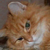 Пртрет рыжего кота :: Ксения Валерьевна