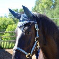 Портрет лошади :: Ксения Валерьевна