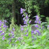 Июнь в Ботаническом саду :: Маера Урусова