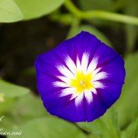 цветок + :: Николай П.