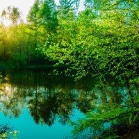 Озеро на дачах! :: Ирина Антоновна
