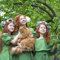 Трио рыжих девочек с потрясающим котиком :: Ира Никина
