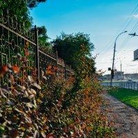 Дорога из растений :: Света Кондрашова