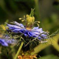 Сказочный цветок. :: Валентина Домашкина