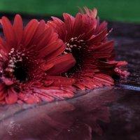 Цветочки :: Елена Яшнева