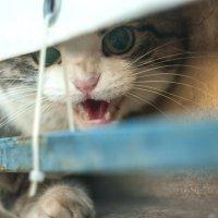 Испуганная кошка :: Albina