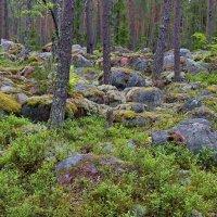 Таинственный лес :: Константин
