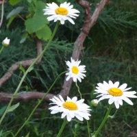 Вечер в саду... :: Тамара (st.tamara)