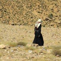 Бедуин. :: Наталья Лебедева