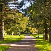Летом в парке :: Виталий