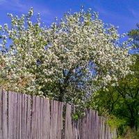 весна :: EDO Бабурин