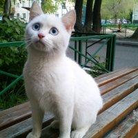 О эти небесно-голубые глаза! :: Evgenija Enot