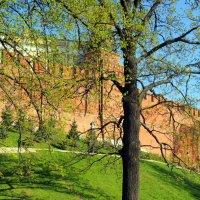 свежие краски от природы :: Олег Лукьянов