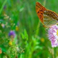 Бабочка :: Елена Яшнева