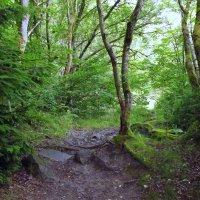 В заповедном лесу.. :: Эдвард Фогель