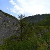 горы, скалы Чемала :: Tatiana Lesnykh Лесных