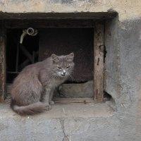 Под цвет стены, с загадочной улыбкой... :: Николай Белавин