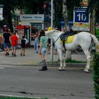 Лошадь и его хозяйка :: Света Кондрашова