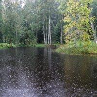 Михайловское в дождь :: Наталья