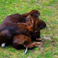 Братцы кролики :: Nina Yudicheva