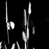 Ночь2 :: Анастасия