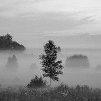 В тумане :: Павел Кочетов