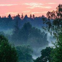 Вечер в лесу :: Павел Кочетов
