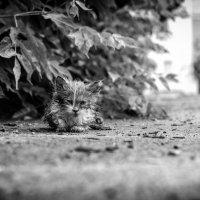В мире животных :: Роман Шершнев