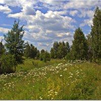 Просто лето :: Вячеслав Минаев