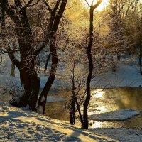 Морозное утро :: Владимир Брагилевский