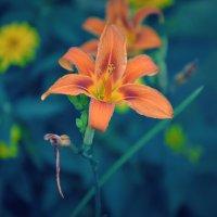 Цветы :: Ирина