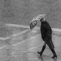 Ленинградская погода :: ник. петрович земцов