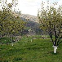 весна в Армении 4 :: Лидия кутузова