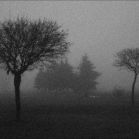 Парковый туман :: Юрий Васильев
