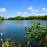 Городское озеро в летний день :: Маргарита Батырева