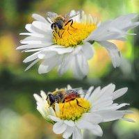 Пчелка :: Виктор