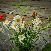 Полевые цветы :: Людмила Фил