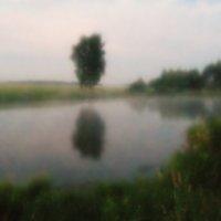 Два дерева :: Ирина Бруй