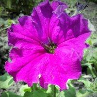 Цветок :: Павел В.