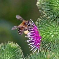 Экзотический мир насекомых :: Валерий Басыров