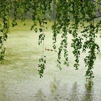 Идет сильный дождь :: Лидия (naum.lidiya)