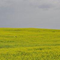Двое в поле :: Алеся Пушнякова