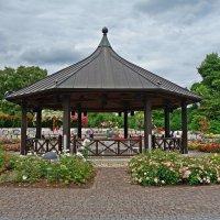 В Ботаническом саду Аугсбурга время цветения роз!!!... :: Galina Dzubina