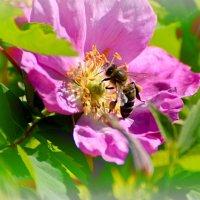 этюд с пчелкой :: linnud